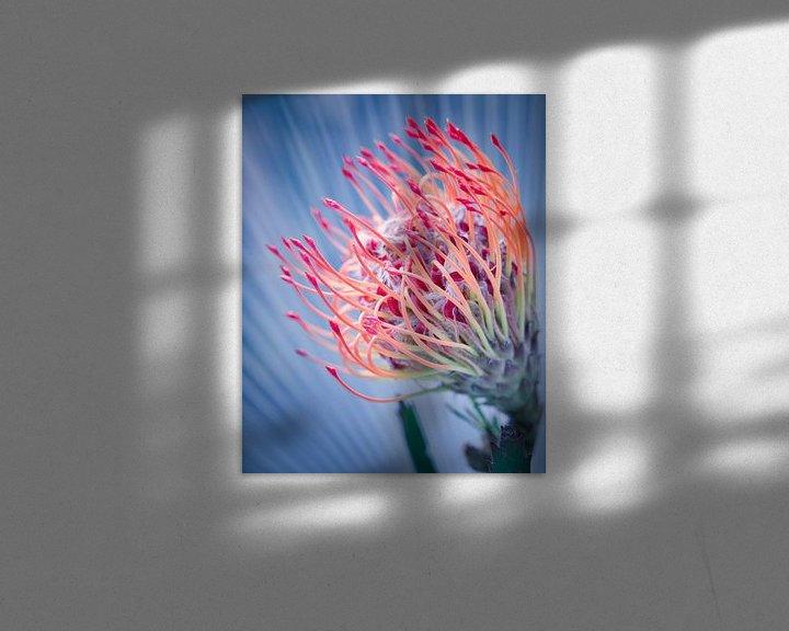 Beispiel: Bunte Blume von Wim van Beelen