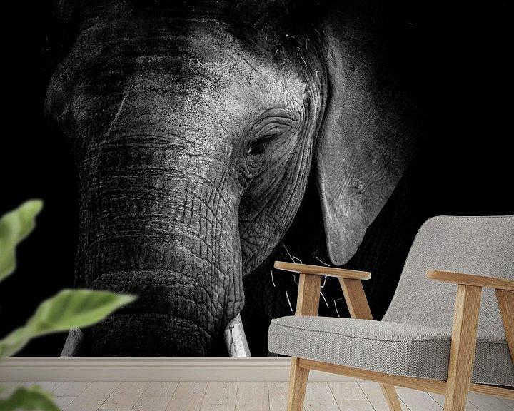 Beispiel fototapete: Elefant von Jon Geypen