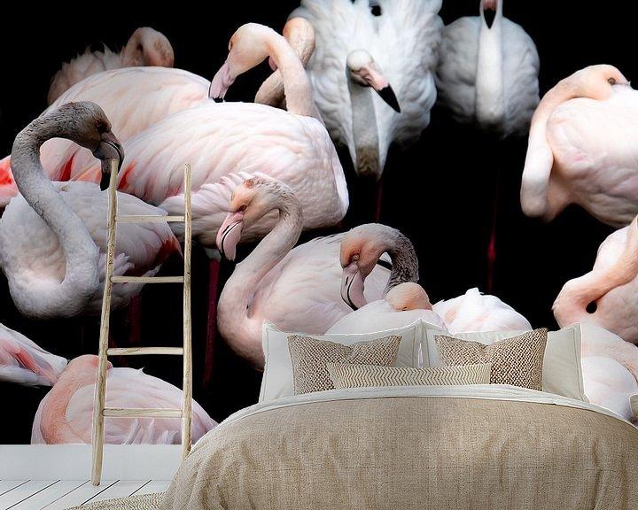Beispiel fototapete: Flamingos von Jon Geypen