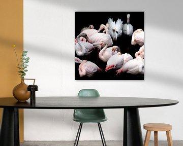 Flamingos von Jon Geypen