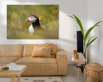 Papageientaucher von Jon Geypen