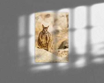 Felswallaby in Australien I von Geke Woudstra