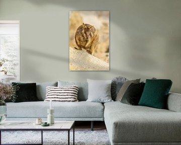 Felswallaby in Australien II von Geke Woudstra