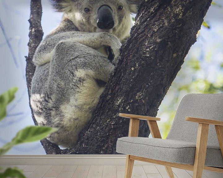 Beispiel fototapete: Koala im Eukalyptusbaum ruhend I von Geke Woudstra