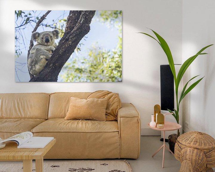 Beispiel: Koala im Eukalyptusbaum ruhend II von Geke Woudstra