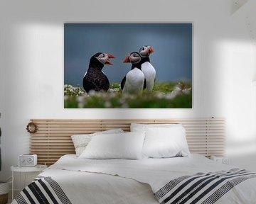 groep papegaaiduikers op Skomer Island voor de kust van Wales van gaps photography