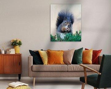 Eichhörnchen von Roos Piek