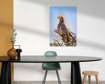 Zuidelijke Geel gefactureerde neushoornvogel van Jan Schuler