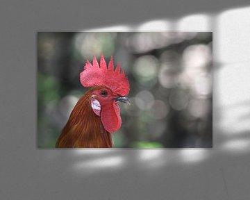 Porträt eines Hahns von Koen Venneman