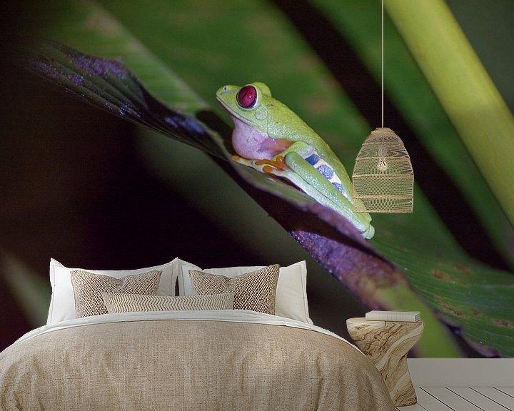 Sfeerimpressie behang: Klassieke Costa Rica kikker van Kevin Pluk