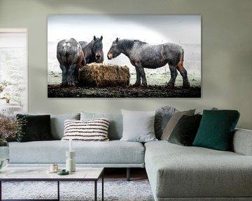 Workinghorses eating hay van Willem Jongkind