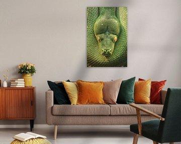 Grünbaumpython von Ronald Mallant