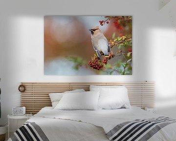 Seidenschwanz von Mark van der Walle