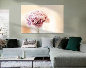 rosa Sternchen von Tania Perneel