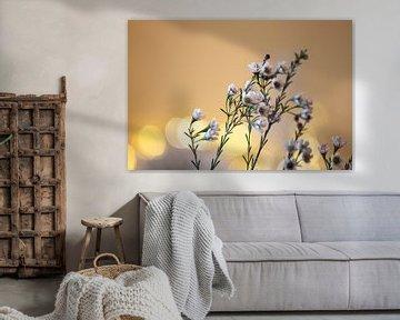 kleine Blumen von Tania Perneel