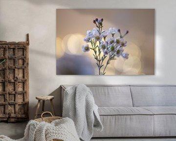 süße Blumen von Tania Perneel