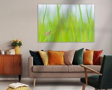 Vlinder in het gras van Fokko Erhart