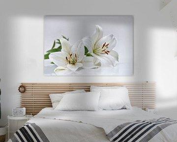 weiße Lilien von Claudia Moeckel