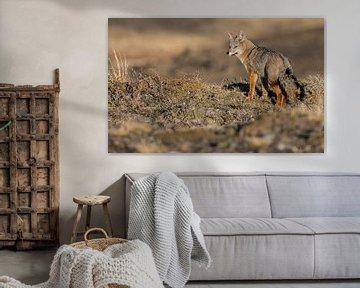 Renard de Patagonie dans le paysage sur Lennart Verheuvel
