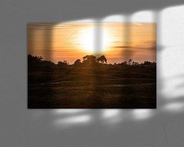 ondergaande zon over de Veluwe van Tania Perneel