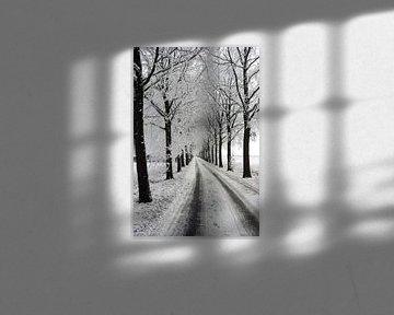 avenue d'hiver avec paysage d'arbres