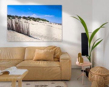 les dunes sur la plage de texel