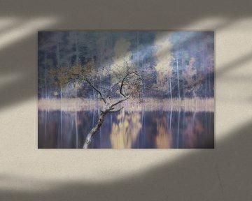 fogy lake van Marc Hollenberg