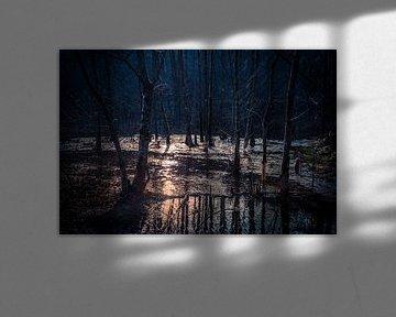 magic woods van Jeroen Verbiest