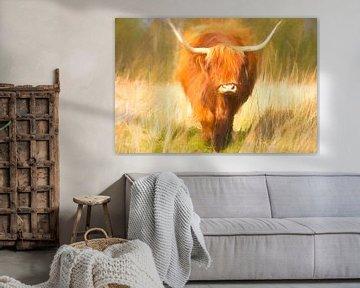 Schotse Hooglander geschilderd