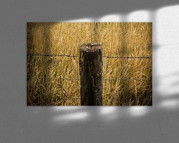 Paal in graanveld van Kenji Elzerman