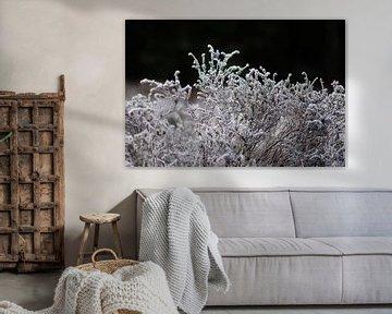 bevroren hei van Tania Perneel