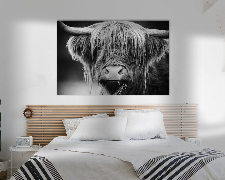 Sfeerimpressie: Schotse Hooglander van Mark van der Walle