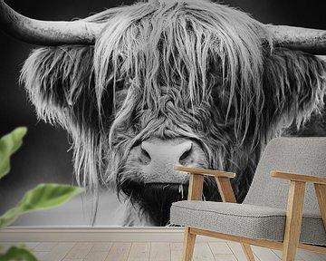 Schotse Hooglander van Mark van der Walle
