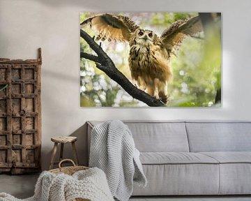 Owl spreading its wings van Anne Vermeer