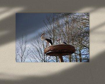 Genießender Storch mit Freund von Stacy Slotboom