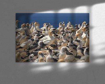 Gannet Colony van Anne Vermeer