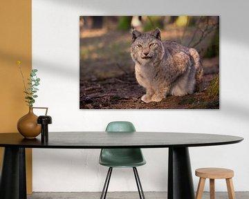 Lynx van Dennis Eckert