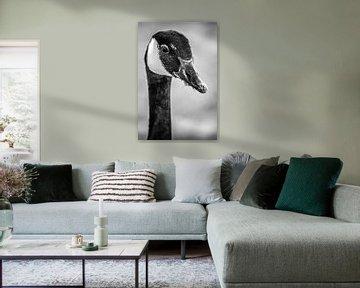 Portret van een Canadese gans