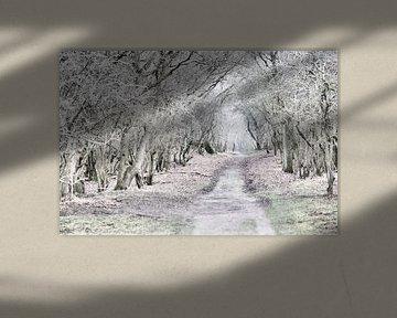 Waldweg 3 von Erik Reijnders
