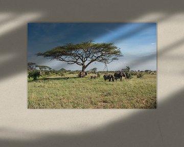 Gruppe von Elefanten von Menno Selles