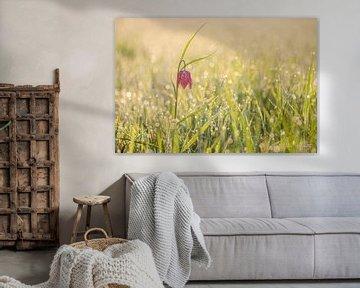 Wilde Kiebitzblume (Fritillaria meleagris) von Onno Wildschut