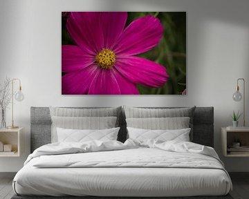 Blume Nahaufnahme von Lizet Wesselman