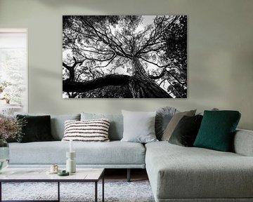 Schwarz-Weiß-Baum von Ellis Peeters