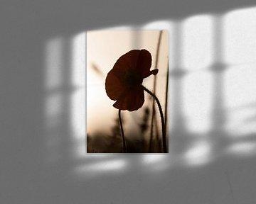 Silhouette einer Mohnblume von Ellis Peeters