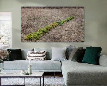 Groene lijn; landschapskunst van Dick Doorduin