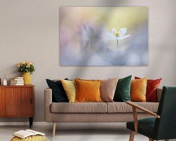 Friendly flowers van Bob Daalder
