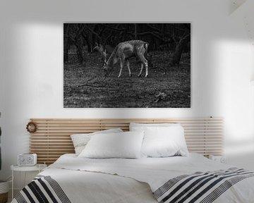 Weidende Hirsche in schwarz-weiß von Patrick Herzberg