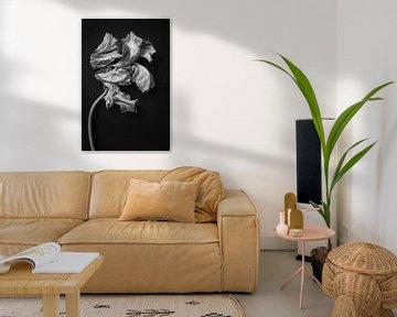 Rembrandt tulp solo van Karel Ham