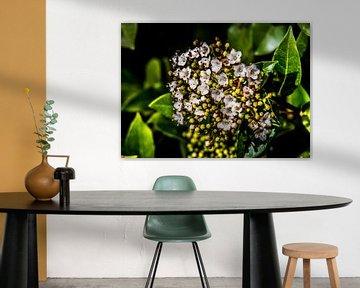 Bergblumen von Yann Mottaz Photography