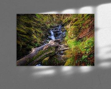 Wald mit fließendem Bach in den schottischen Highlands von gaps photography